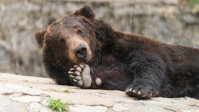 Should Share Investors Be Worried About A Bear Market?